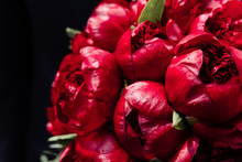 Peonies. Beautiful Bouquet Of Fresh Red Peonies. Holiday, Gift, Blossom, Flowers