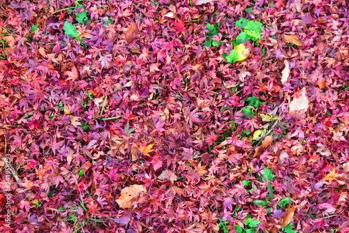 紅葉の落ち葉の風景21