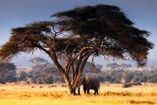 Elephant Under Tree