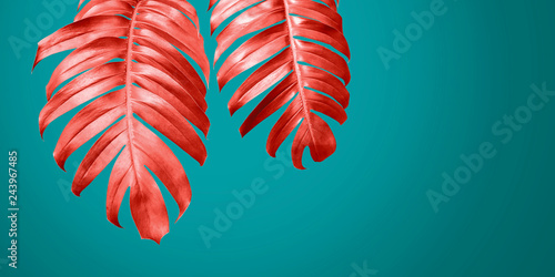living-coral-philodendron-leaves