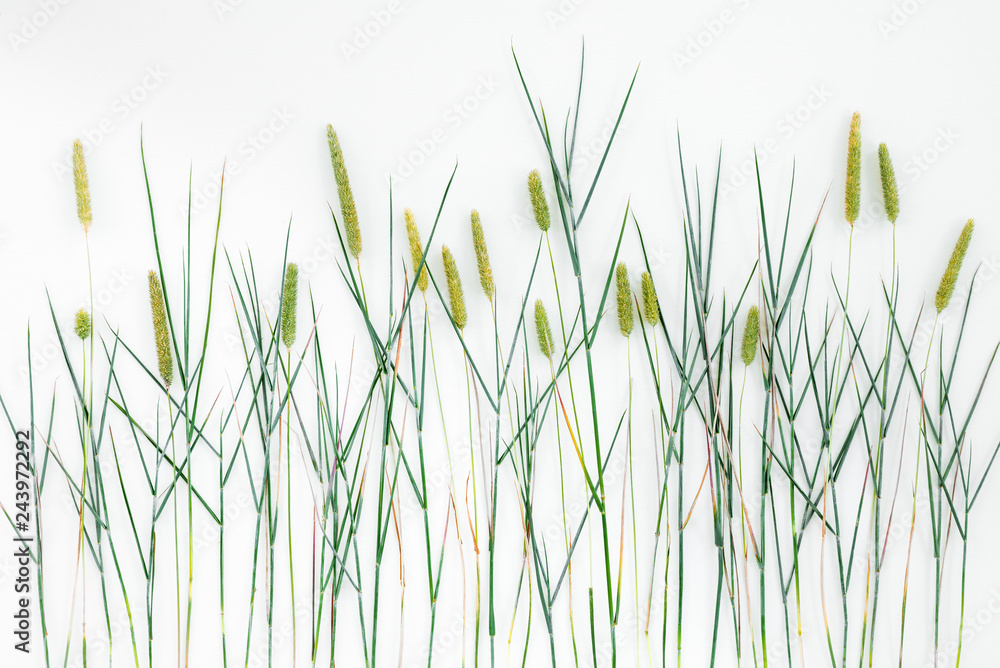 Fototapety, obrazy: Close-up of Timothy grass on white background