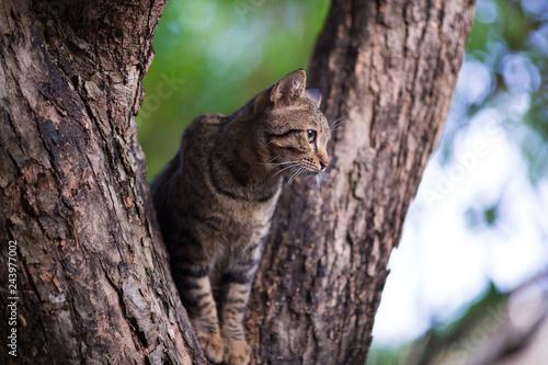 Fotografía  Tabby cat on the tree looking something