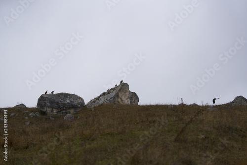 Garden Poster Natural Park ruins of old castle