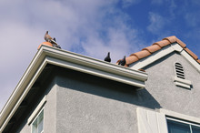 Pigeons Sitting On A House's R...