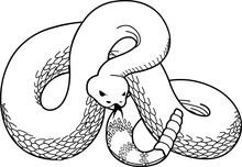 Rattlesnake Vector Illustration
