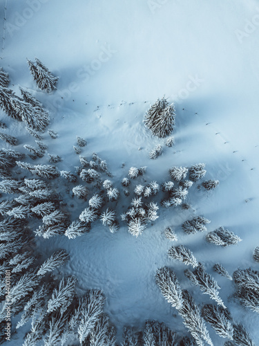 Obraz Aerial view of spruce fores, winter theme. - fototapety do salonu