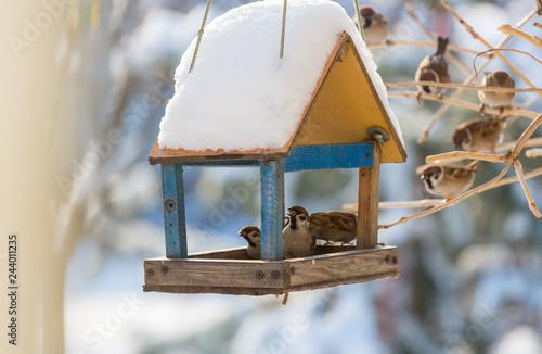 Sparrow Canvas-taulu