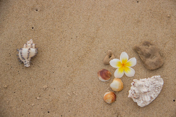 Fototapeta na wymiar Beautiful decor of magnolia flower and seashells on the sand with space for text