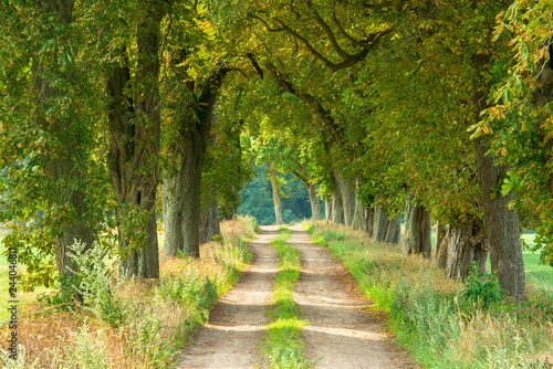Farm Road through Avenue of Horse Chestnut Trees