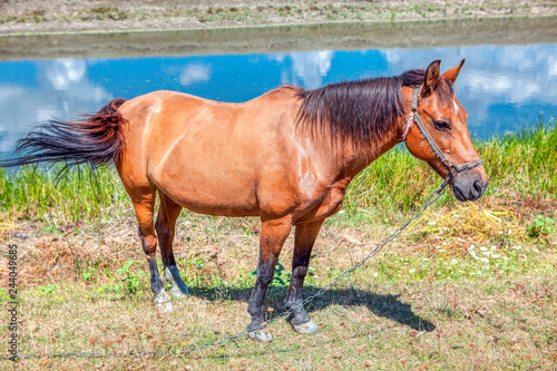 Fotografía  Horse standing by river water