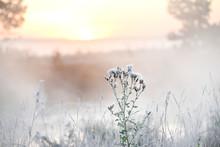 Early Misty Gentle Morning On ...