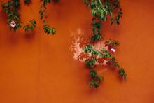 Flower Vine On Orange Wall