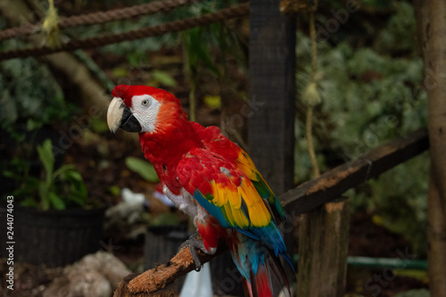 Photo  isolated macaw parrot perched on a branch in the forest