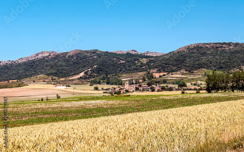 Fields grown in the Spanish province of Soria on a sunny day