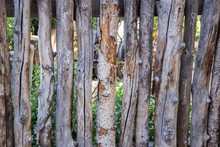 Coyote Or Wicked Stick Fencing Around A Garden - Close-up Of Rough Tree Sticks Used As Fencing In USA Southwest Landscaping