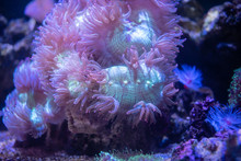 Pink And Green Elegance Coral ...