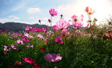 Beautiful Spring Flower Blossom With Mountain And Blue Sky. Selected Focus.