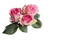 Three Beautiful Pink And White...
