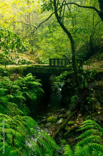 Fototapeta Einsame Brücke im Regenwald mit Bachlauf obraz na płótnie