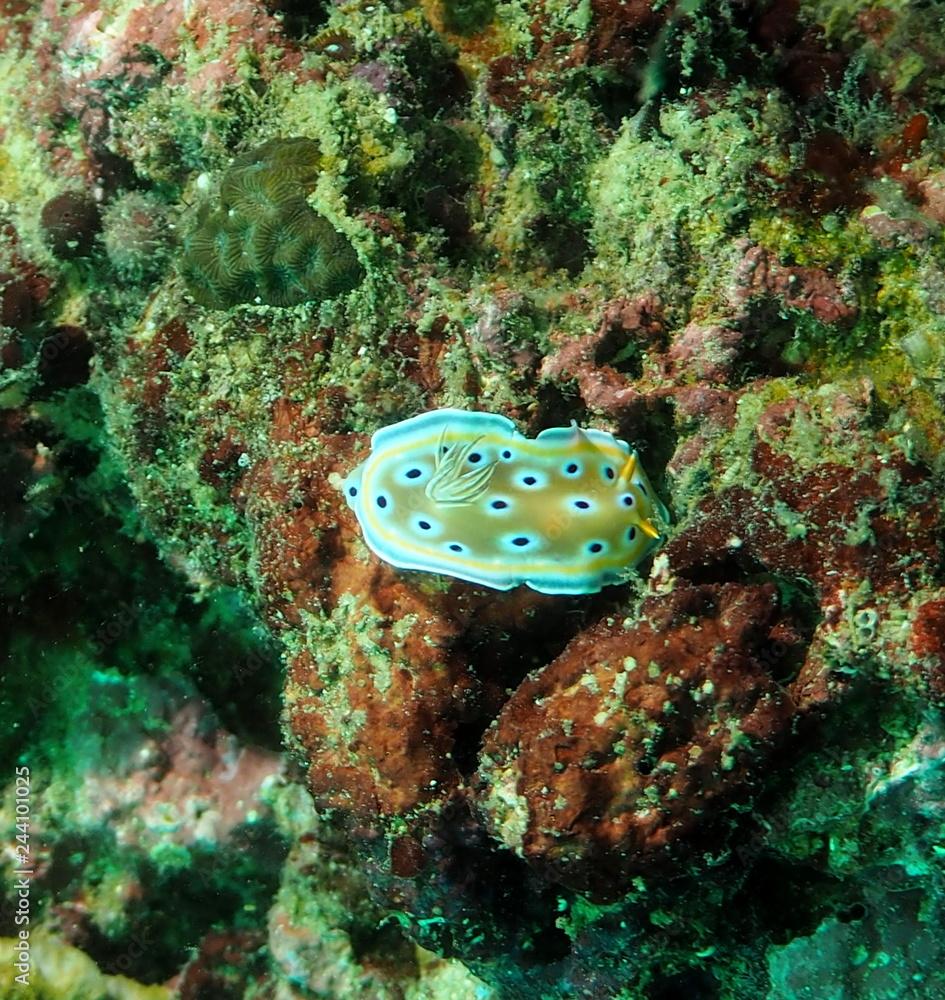 Fototapeta Podwodny świat