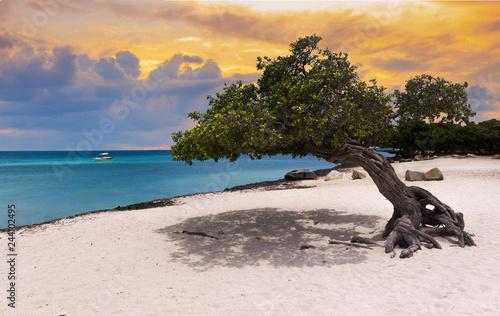 sunset beach in Aruba Canvas Print