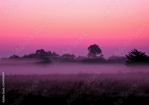 Purple Foggy Landscape