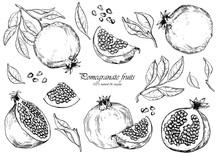 Vector Set Of Pomegranate Fruits. Isolated Elements For Design.