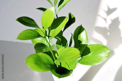 Garden Poster Plant 緑の葉 陽ざし 影 屋内
