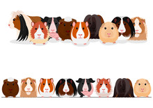 Set Of Guinea Pigs Group And B...