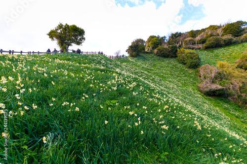 灘黒岩水仙郷の風景