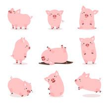 Cute Pink Pig Set