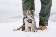 Traveler Man With Cute Cat Walking In The Winter Outdoor.