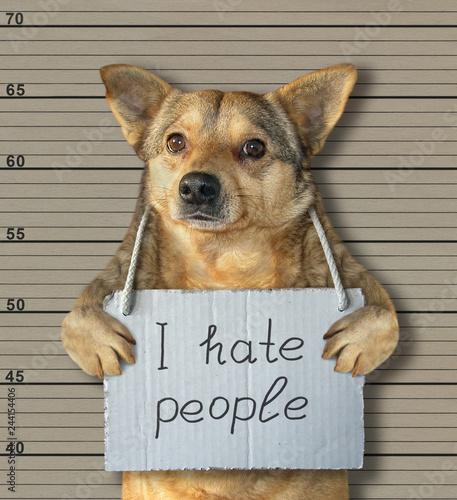 Obraz na plátně  The bad dog hates people