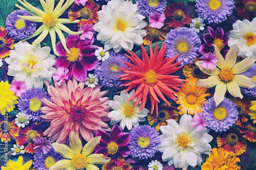 Photo sur Aluminium Fleuriste floral background for greeting or postcard. toning