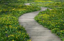 Winding Wooden Path In The Gar...