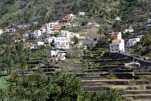 Terraces In Valle Gran Rey, Gomera