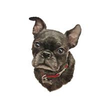 French Bulldog. Realistic Port...