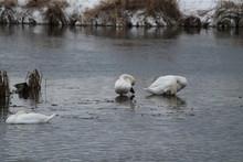 Birds Dacing In Snow