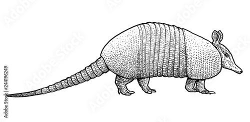 Armadillo illustration, drawing, engraving, ink, line art, vector Canvas Print