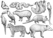 South American Animal Collecti...
