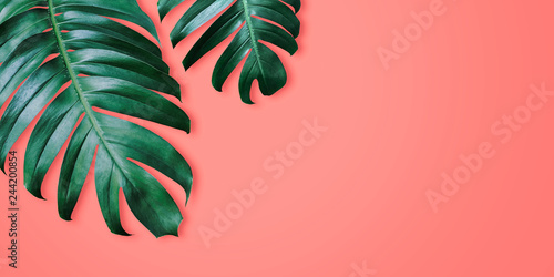 Photo  Philodendron tropical leaves on coral color background minimal summer