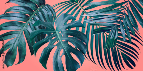 Photo  Summer tropical leaves on coral color background
