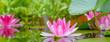 Leinwanddruck Bild - Panorama der Seerosen im Wasser - Gartenteich mit Pflanzen