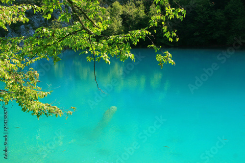 Wall Murals Green coral Beautiful view of Plitvice Lakes National Park in Croatia.