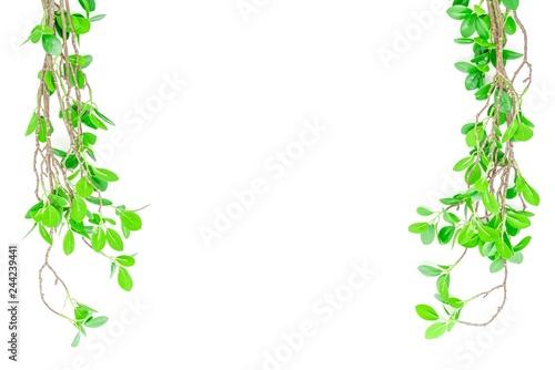 Fotografie, Obraz  緑の葉のある枝 背景素材