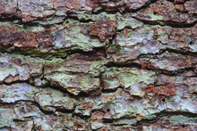 Texture D'écorce De Pin En Plan Rapproché, Dans Des Tons Marron Et Vert