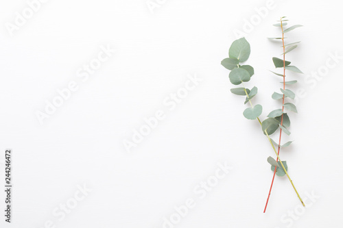 Flowers and eucaaliptus composition. Pattern made of various colorful flowers on white background. Flat lay stiil life.