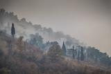 Widok mgłowa góra z drzewami - 244249033