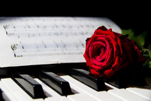 A Red Rose On The Piano Keys