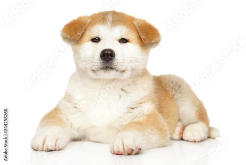 Obraz Japanese Akita-inu puppy on white background - fototapety do salonu
